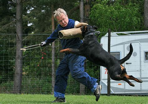 united states rottweiler club vom aztlan rottweilers german rottweiler breeders puppies import and sales
