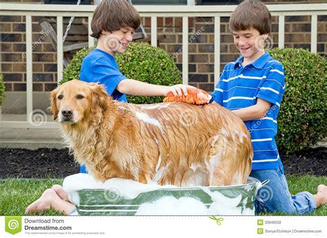giving a puppy a bath boys giving a bath stock photography image 33946532