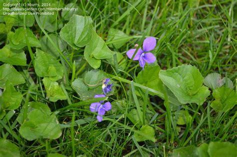 Plant Identification Closed Please Identify Purple Garden Flowers Identification