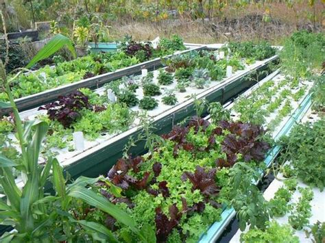 Backyard Aqua Designs Aquaponics Is Easy With Our Systems Friendly Aquaponics