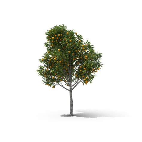 orange tree png images psds   pixelsquid