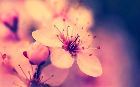 imagenes de flores wallpaper hd 50 wallpapers hd quot flores para tod s quot taringa