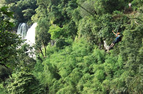 tree top explorer  jungle hotel contact