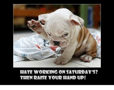 Saturday Memes 18 - working saturday meme pictures 12