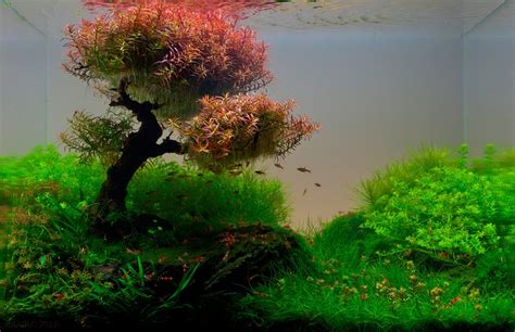 Aquascape Gallery by 22 Amazing Underwater Aquascape Landscaping Pictures That