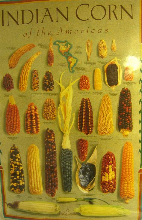top 28 history of corn corn mexican aztec mayan pre columbian food history history of the