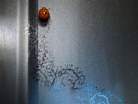 how to keep ladybugs out of house how to keep ladybugs out of house five tips to get rid of bugs how to keep