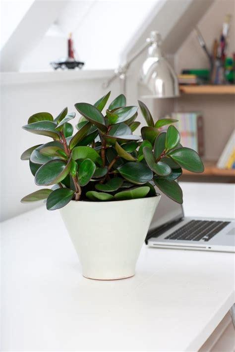 moderne zimmerpflanzen sch 246 ne zimmerpflanzen sch ne zimmerpflanzen living at