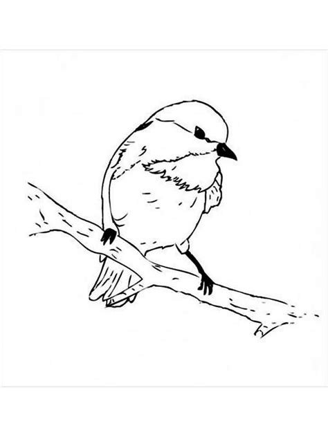 chickadee coloring pages download and print chickadee