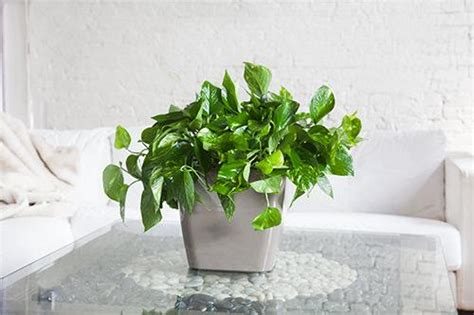 good office plants nyc office plant delivery service