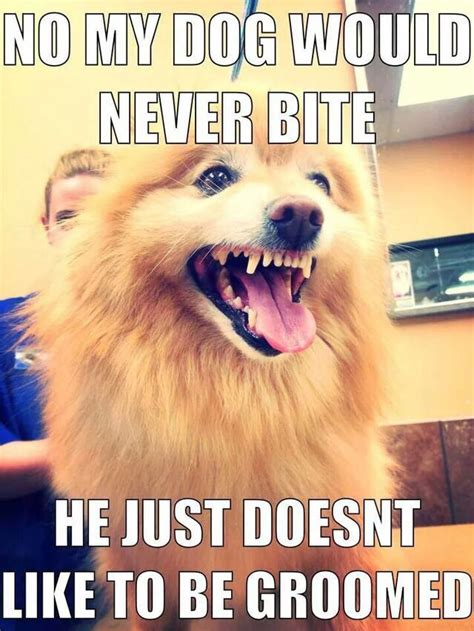 Dog Groomer Meme - 162 best groomer humor images on pinterest so funny