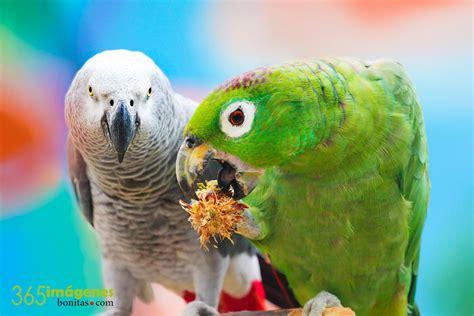 imagenes bellas de animales fondos de pantalla gratis en hd