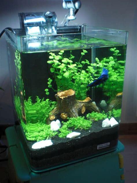 Lu Aquarium Aquascape betta nano tank fishy cubes b 234 ta et