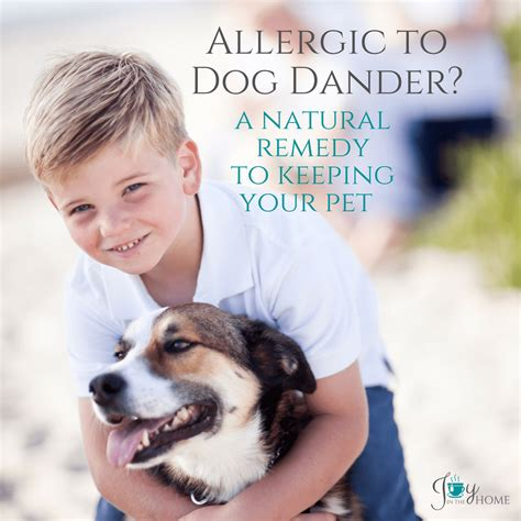 allergic to dogs allergic to dander a remedy to keeping your pet in the home