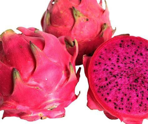 Jual Bibit Buah Naga Merah Fruit Jual Bibit Buah Naga Merah
