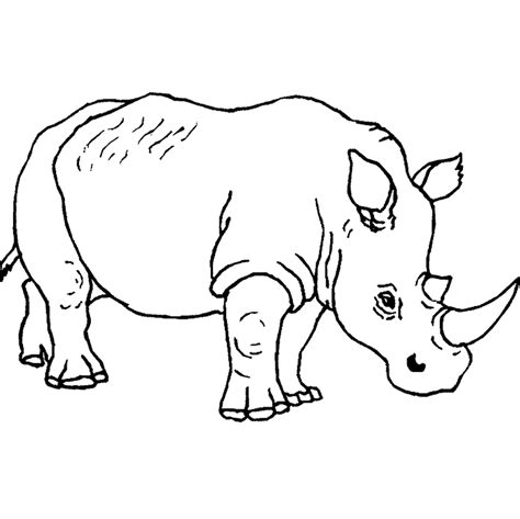 online coloring pages of animals free animal coloring pages rhino animal coloring pages