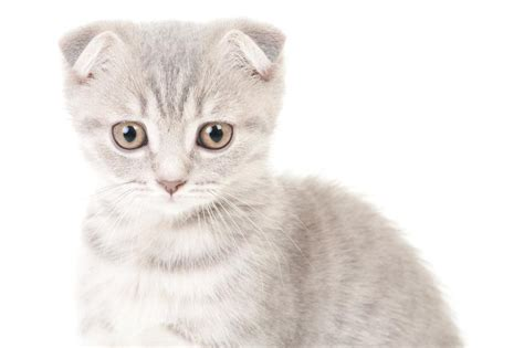 grey cat names for males cute cats