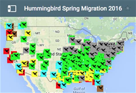 hummingbird migration maps pokemon go search for tips