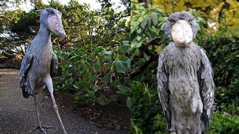 imagenes de rosas unicas en el mundo 10 aves ex 243 ticas 218 nicas en el mundo youtube