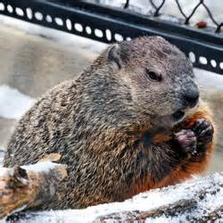 groundhog day milwaukee zoo welcome to the milwaukee county zoo