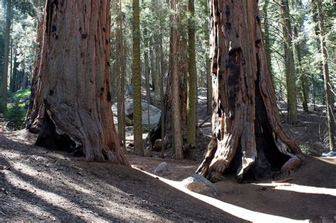 The World National Parks Congress congress trail sequoia national park flickr photo