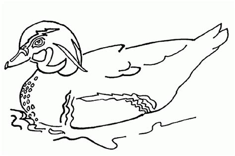 imagenes para colorear un pato dibujos de patos para pintar dibujos de patos para colorear
