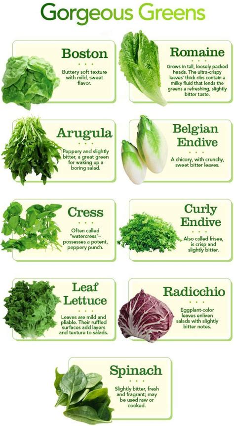 different type of leafy vegetable with name types of greens chart different types of lettuce and my lettuce salad and types
