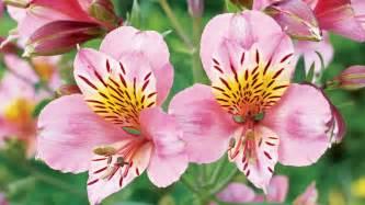 flower plants best flowers for bees butterflies sunset