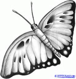 Simple butterfly drawings in pencil top realistic butterfly drawings