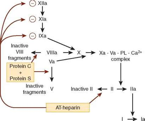 c protein coagulation coagulation disorders