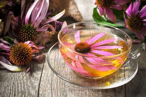 reasons    drink echinacea tea  day