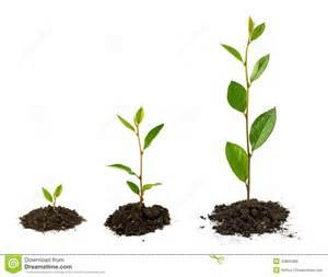 le pflanzenwachstum crescita di pianta fotografia stock immagine 40883486