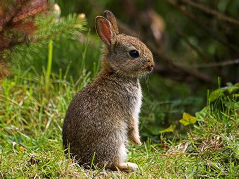 8 Tips On Caring For Pet Rabbits 8 tips on caring for pet rabbits lifestyle