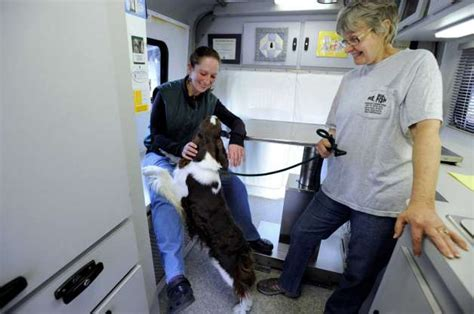 creature comfort holistic veterinary center mobile veterinarians quell fears for pets and their owners