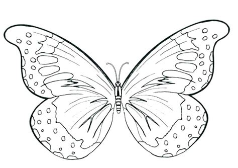 coloring pages of big butterflies 95 great beautiful butterfly coloring pages with page