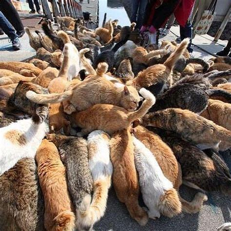 cat island japan cat island japan 50 islands you must visit before you