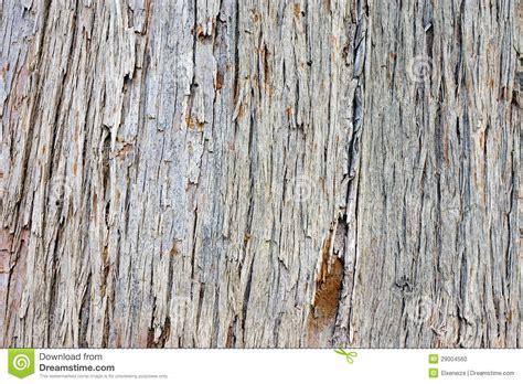 pine tree bark stock photo image 29004560