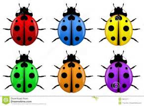 what color are ladybugs ladybugs in different colors isolated royalty free stock