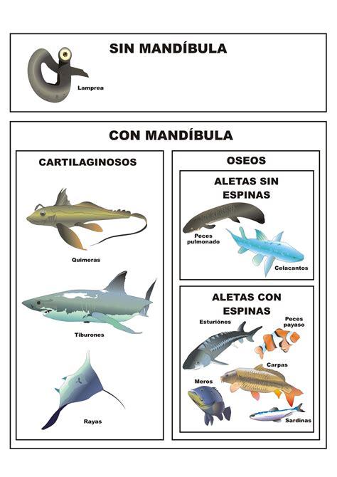 los peces de la clasificaci 243 n de los peces plagda infantil