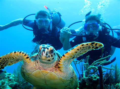 dive roatan image gallery roatan diving