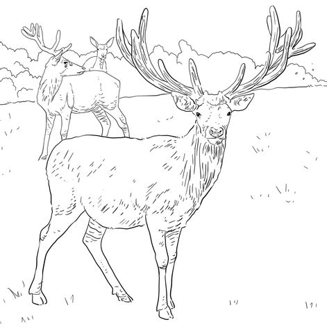 detailed deer coloring page detailed coloring pages deer coloring pages