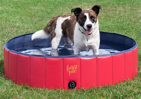 make bathtime fun for your dog make bathtime fun for your dog 100 make bathtime fun for