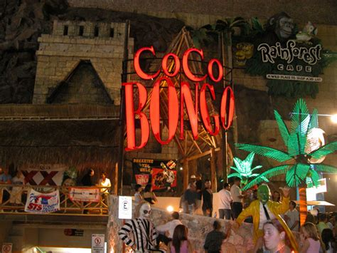 Top Bars In Cancun student tours student electives student study trips