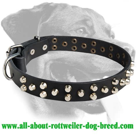 rottweiler collar buy leather rottweiler collar nickel decorations walking