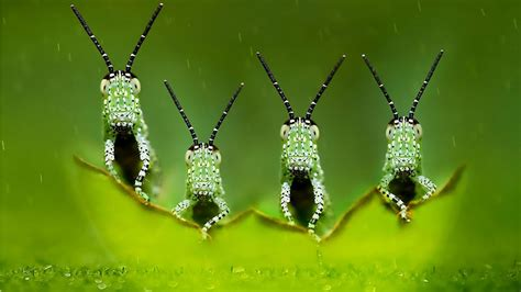 wallpaper little green little green insects wallpapers 1366x768 220174