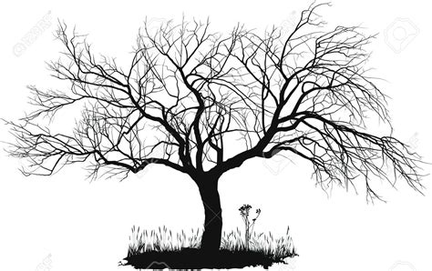Y Tree Drawing by Jcts Quot The Self And Becoming Quot Trees Assignment