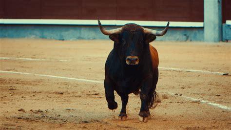 imagenes perronas de toros toro el documental que usted no ver 225