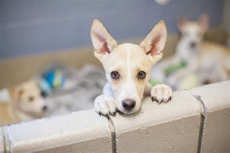 where can you adopt a puppy you can adopt a cat or at the detroit zoo this weekend the