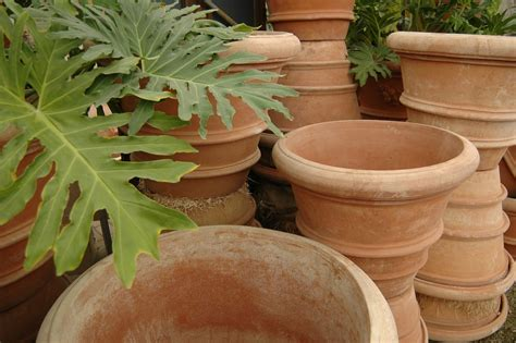 Terracotta Garden Planters by Terra Cotta Planters Pots Eye Of The Day Garden Design
