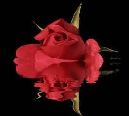 hermosas im 225 genes de rosas reflejadas en el agua